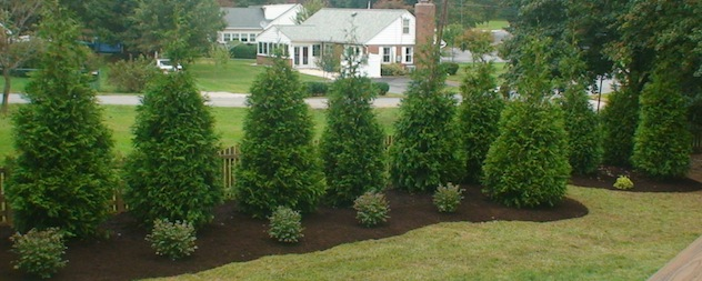 privacy trees Maryland